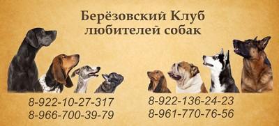 Берёзовский Клуб Любителей Собак